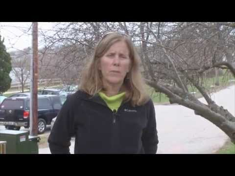 Lucy Loyd :: Water Mitigation // Bio 101 // Southern Maine Community College