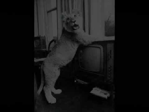 Christian The Lion At World