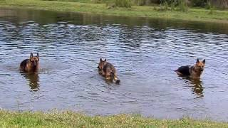 Off Leash Dog Training Dogs Puppies My Stream of Consciousness