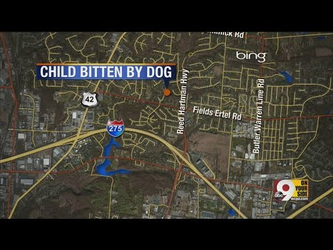 Six-year-old Girl Bitten By Dog video