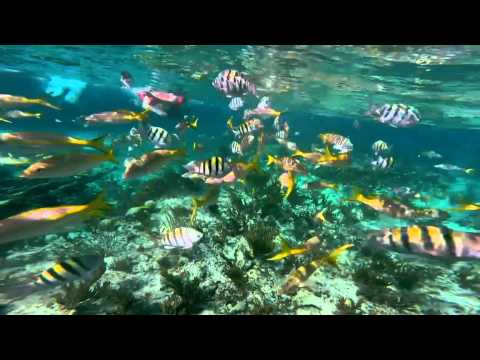 Grand Bahama Island -  Sea Safari Snorkel by Boat