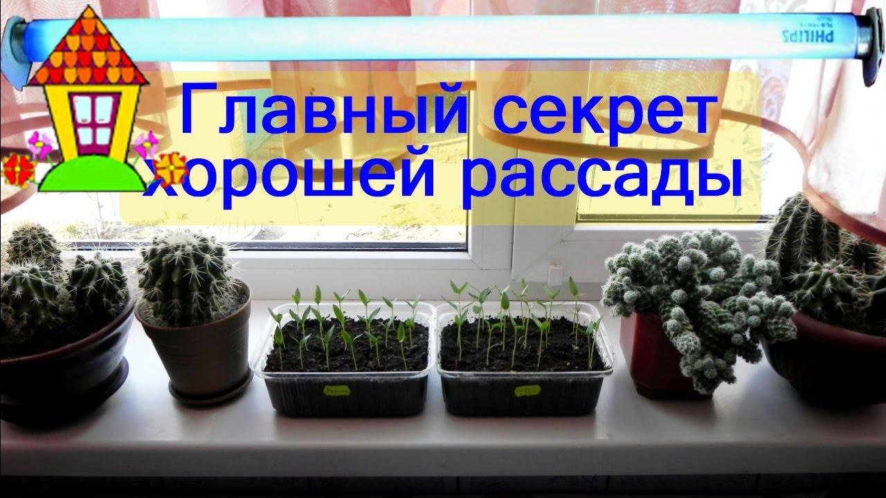 Все для выращивания рассады на подоконнике 62