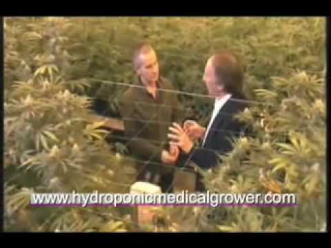Cannabis Planet Show 4, Part 1