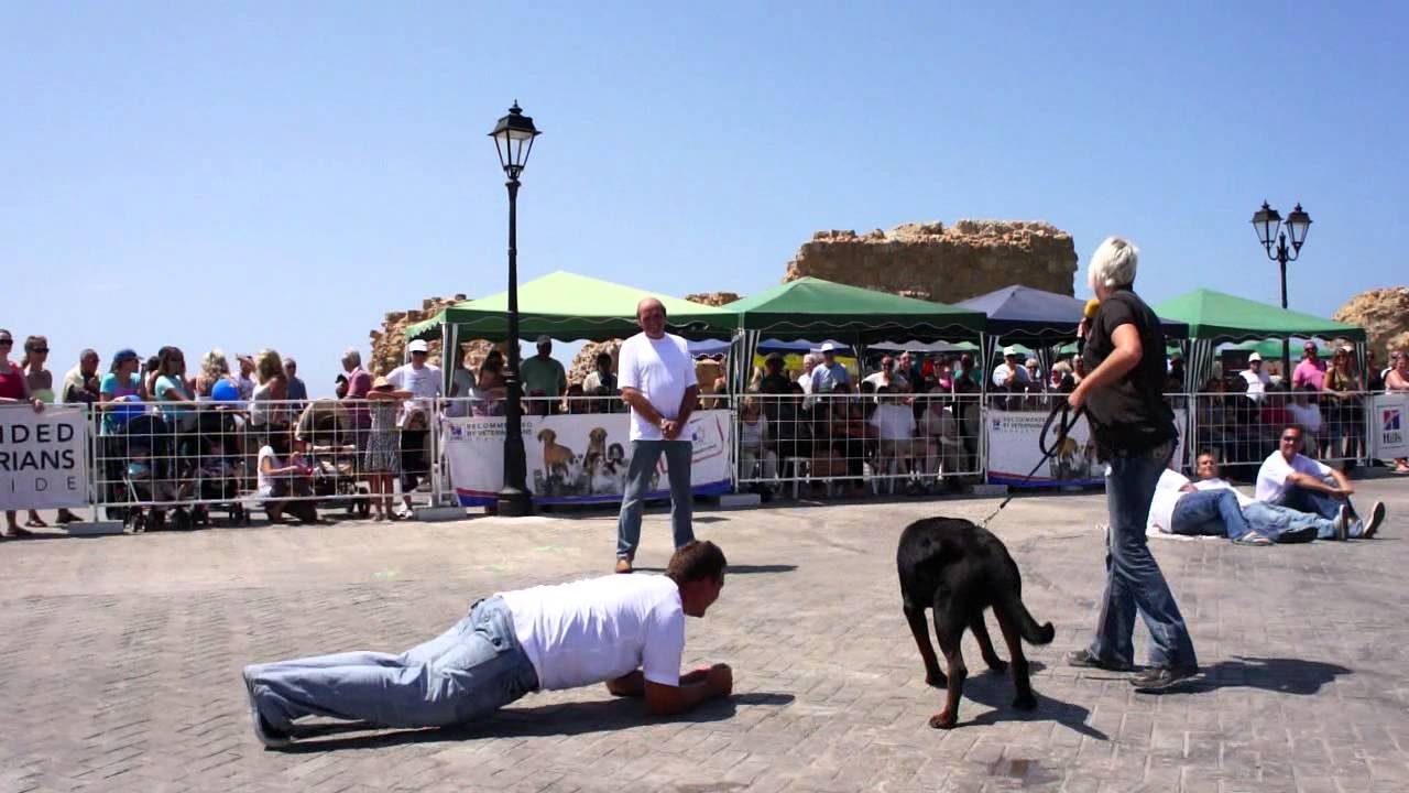 Hot Dog Show Paphos