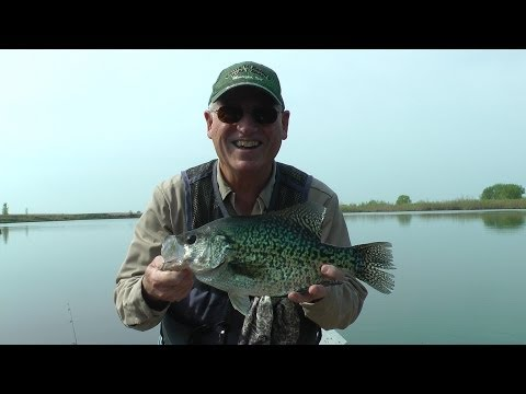 Best Ever Giant 18 inch Crappie on video. Free Fishing Video by Will See Fish