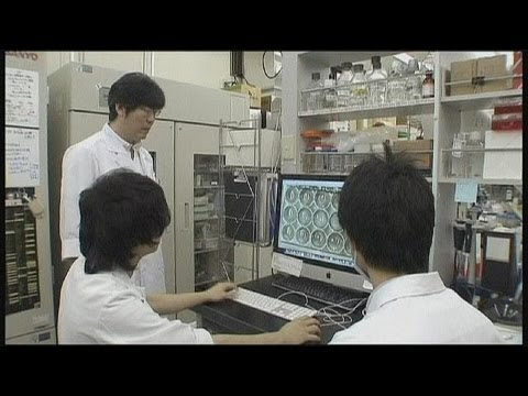 Japanese stem cell experts make liver growth breakthrough - science