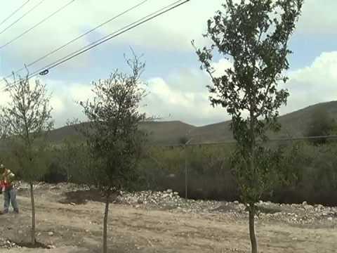 Inician Línea Verde y anuncian Bosque Urbano  en Ramos Arizpe