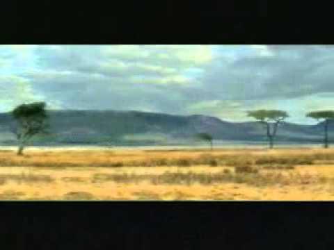 Video Lucu Rusa Tabrak Pohon