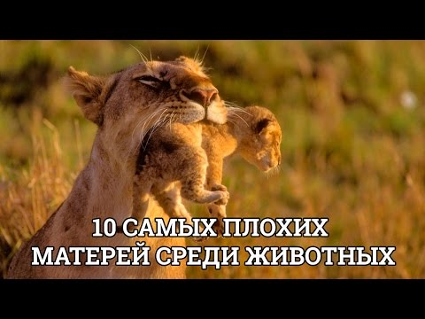 10 САМЫХ ПЛОХИХ МАТЕРЕЙ СРЕДИ ЖИВОТНЫХ