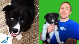 Puppy Potty Training Tips- Livestream Subscriber Q&A