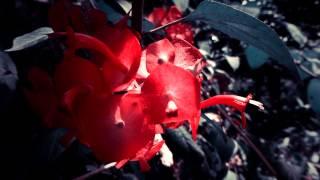 #5618, Pequeñas flores naranjas [Efecto], Plantas, árboles y arbustos