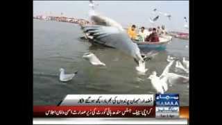 KHUZDAR. KUNJ BIRD (KHAKHOOR) ON SAMAA TV REPORT MUNIR NOOR BALOCH.mpg