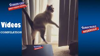 Scared Cat Compilation 2018 | Try Not To Laugh