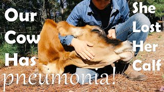 Our Cow Has Pneumonia!!! + She Lost Her Calf!!!