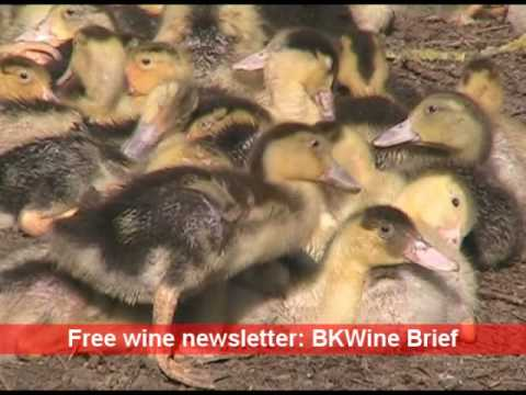 A duck farm in the Perigord in south-western France.