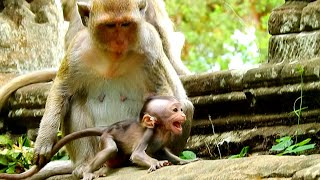 Baby monkey Opie Cry very Strong by Bad monkey Kidnapped