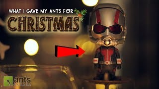 'Twas The Ants' Night Before Christmas 2017