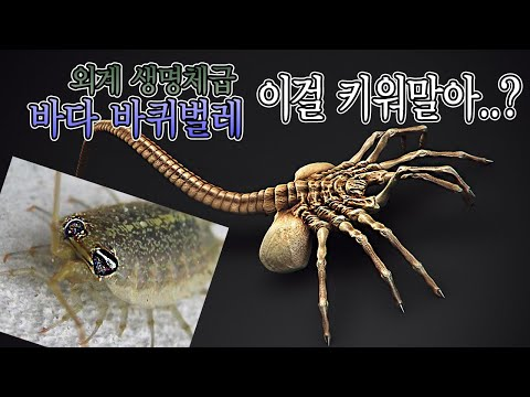 외계생명체급 바다바퀴벌레 3마리 선물받았는데...이걸 키워야하나?