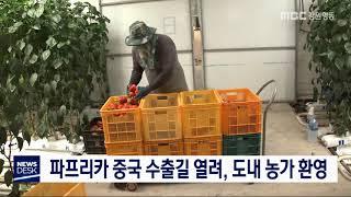 투/파프리카 중국 수출길 열려, 도내 농가 환영