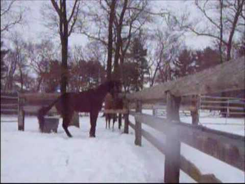 Suffolk Downs Thoroughbreds at Blazing Saddles (winter 2008)
