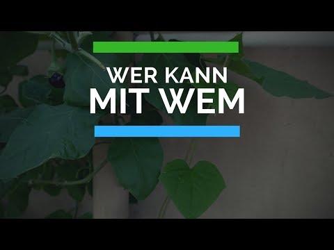 Können Pflanzen miteinander kommunizieren