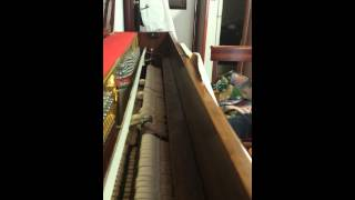 Video Maple Leaf Rag - Scott Joplin