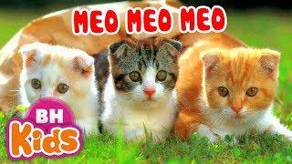 Meo Meo Meo ♫ Chú Mèo kêu meo meo ♫ Nhạc Thiếu Nhi Cho Bé