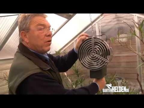 Kübelpflanzen Überwinterung Im Gewächshaus - GartenHELDEN Folge 127