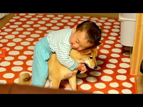 柴犬ゴン太とふみ君30 愛情表現が下手な1歳児 Shiba Inu & Baby