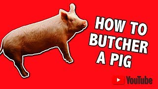 how To Butcher A Pig, Start To Finish The Easy Way