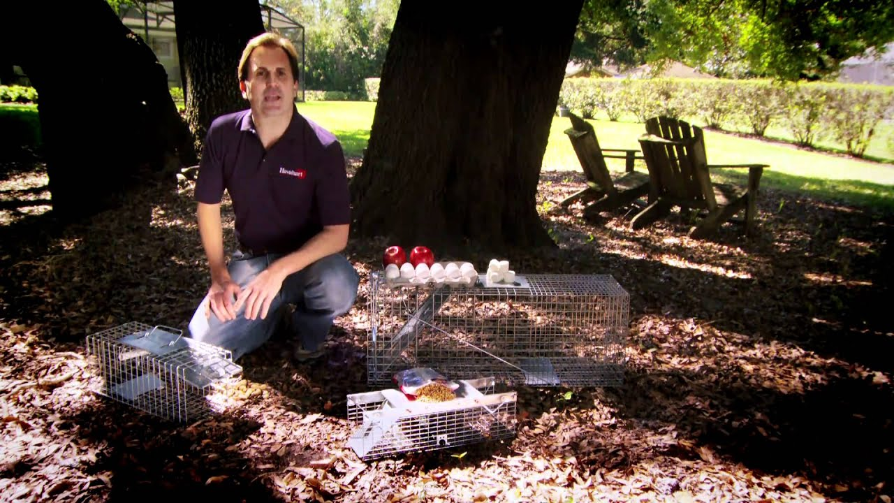 how to make a live animal trap