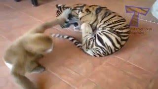 fany animals part 1
