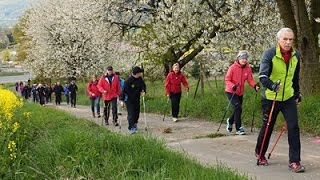 Kirschblüten 1 - Walking Event 2016
