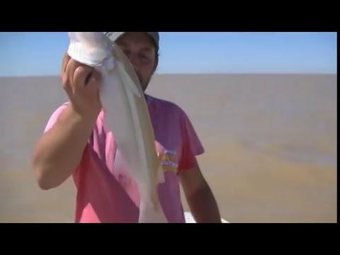 Pejerrey matungo pescado embarcado sobre el Rio de la Plata Sur
