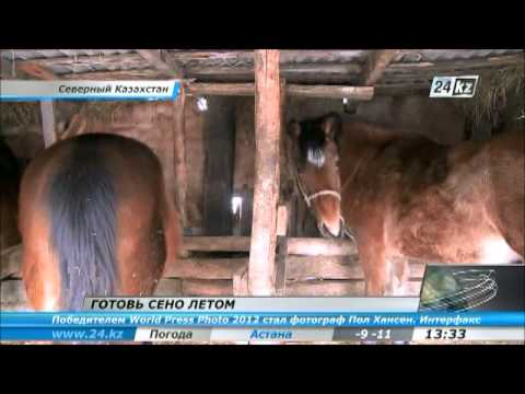 В СКО держать коров стало невыгодно