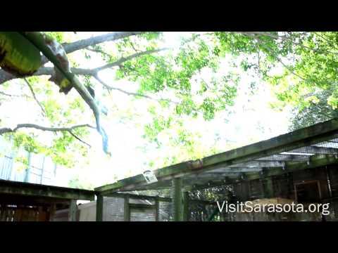 Visit Sarasota County: Save Our Seabirds