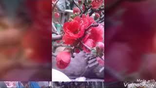 Xuân ơi Xuân 2018
