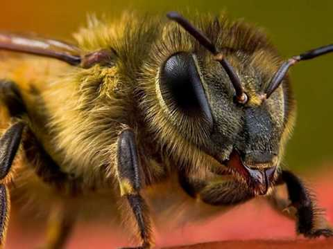 Insect Macro Photography Video