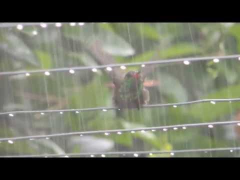 El colibrí de Lucho