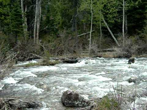 Small rapids at the Laurence S. Rockefeller Preserve in Grand Teton National Park