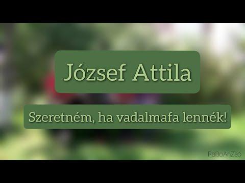 ReBoAnZső - József Attila: Szeretném, ha vadalmafa lennék!