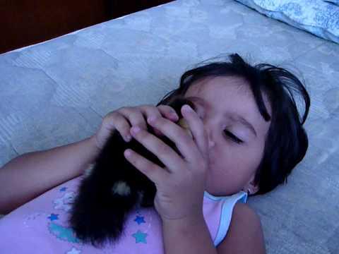 El Pato Bolad