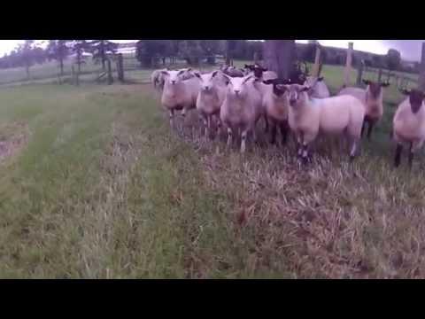 【羊飼い】追う犬の代わりにドローンという発想