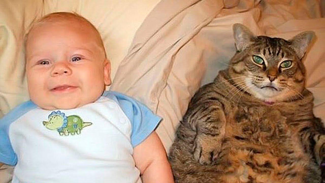 Смешные картинки котов с 47