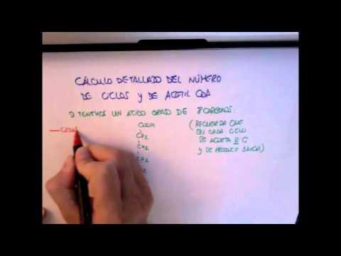 rendimiento energético ácido graso.m4v