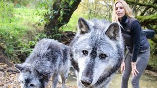 Download Lagu MASSIVE CANADIAN WOLVES UP CLOSE - Wolf Girl Anneka Gratis STAFABAND