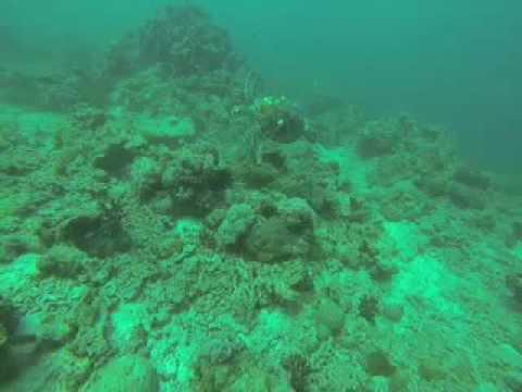A Beautiful Sea Turtle at The Arabian Gulf, ADIL AL KHALID .