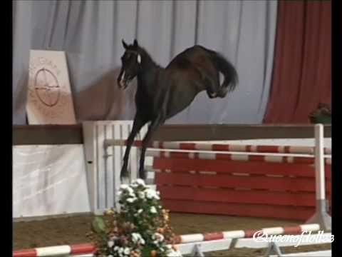 Crazy High Jumping Horses! (HD)