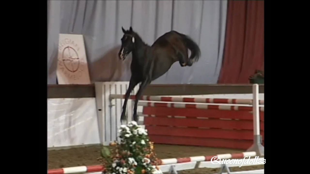 Horse jumping high without rider