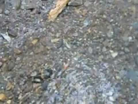 Gold on the Hard Pan Pt 1 of 3.  Yankee Gold Prospecting Adventures